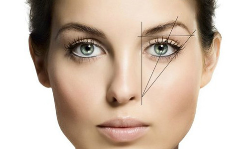 Фото 1. Идеальное соотношение размеров частей брови