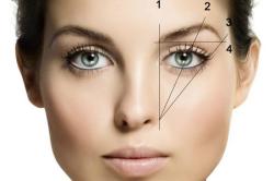 Фото 1. Основные точки: 1 - начальная точка, 2 - высшая точка, 3 - конец брови, 4 - прямая между начальной и конечной точкой брови