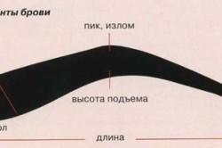 Элементы брови