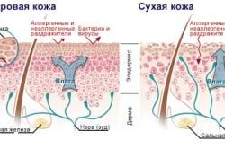 Внутренние факторы, влияющие на способность кожи удерживать влагу