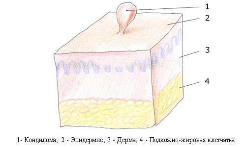 Изображение 4