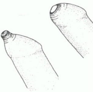 Иллюстрация 8
